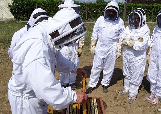 Les ruches de Primagaz
